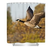 Canada Goose In The Skies  Shower Curtain