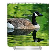 Canada Goose On Green Pond Shower Curtain