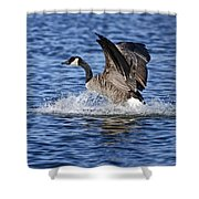 Canada Goose Pictures 111 Shower Curtain