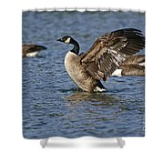 Canada Goose Pictures 165 Shower Curtain
