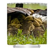 Canada Goose Pictures 189 Shower Curtain