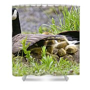 Canada Goose Pictures 192 Shower Curtain