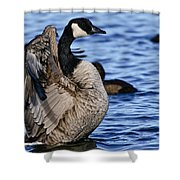 Canada Goose Pictures 84 Shower Curtain