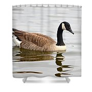 Canada Goose Reflecting In Calm Waters Shower Curtain