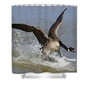 Canada Goose Touchdown Shower Curtain