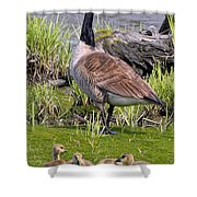 Canada Goose With Young Shower Curtain