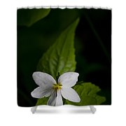 Canada Violet Shower Curtain