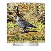 Canadaian Goose Shower Curtain