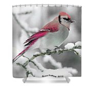 Canadian Cardinal Shower Curtain