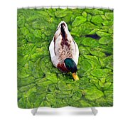 Canadian Duck Shower Curtain