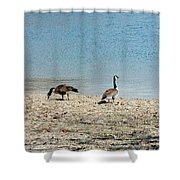 Canadian Geese 2 Shower Curtain