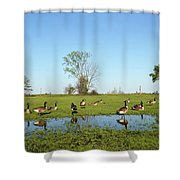 Canadian Geese Community In West Haven Shower Curtain