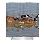 Canadian Geese Mates Shower Curtain