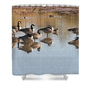 Canadian Geese Stop Over Shower Curtain