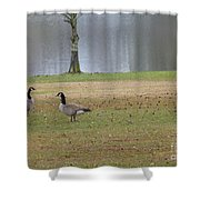 Canadian Geese Tourists Shower Curtain