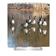 Canadian Geese Watching Shower Curtain