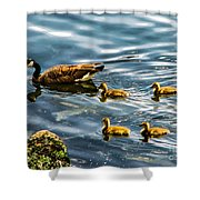 Canadian Goose And Goslings Shower Curtain