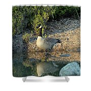 Canadian Goose Reflection Shower Curtain