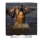 Canadian Goose Smooth Landing Shower Curtain