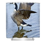Canadian Goose Stretching Shower Curtain