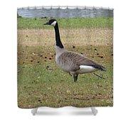 Canadian Goose Strut Shower Curtain