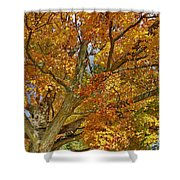 Canadian Tree 2012 Shower Curtain