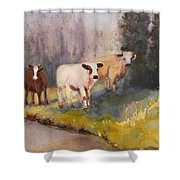 Canal Cows Shower Curtain