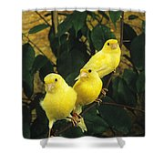 Canari Jaune Shower Curtain