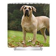 Canary Dog Shower Curtain