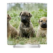 Canary Dog Puppies Shower Curtain