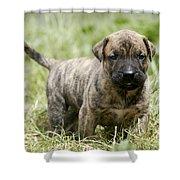 Canary Dog Puppy Shower Curtain