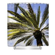Canary Island Date Palm Shower Curtain