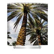 Canary Island Date Palms Shower Curtain