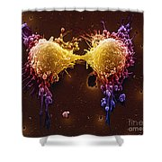 Cancer Cell Division Shower Curtain by SPL and Photo Researchers