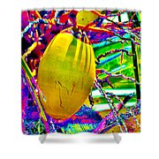 Candied Coconut Shower Curtain