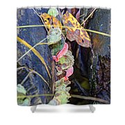 Candied Fungus Shower Curtain