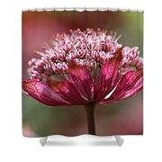 Botanica .. Candy Shower Curtain