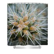 Cane Cholla Cactus Spines Shower Curtain