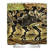 Canebrake Rattlesnake Shower Curtain