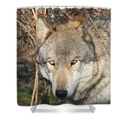 Canis Lupus  Shower Curtain