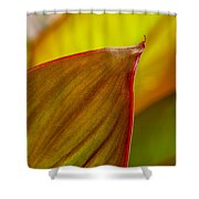 Canna Lily Leaf Shower Curtain