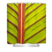 Canna Lily Red Stripe  Shower Curtain