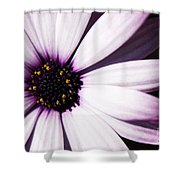 Cannington Roy Shower Curtain