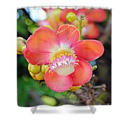 Cannonball Tree Shower Curtain