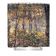 Canopy Collage Shower Curtain
