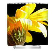 Canopy Of Petals Shower Curtain