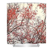 canopy trees II Shower Curtain by Priska Wettstein