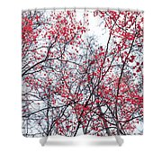 Canopy Trees Shower Curtain