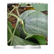 Cantaloupe  Shower Curtain