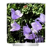 Canterbury Bells Shower Curtain